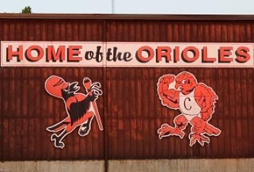 Oriole wall web
